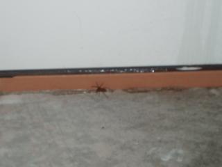 Dead_spider_001