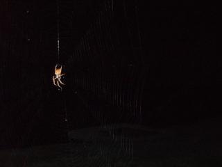 Huge_spider_july_2007_005